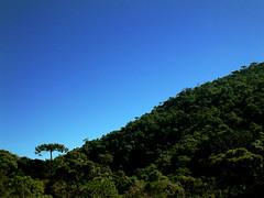 T...ua (...anna christina...) Tags: brazil plant minasgerais nature brasil plantas natureza serradamantiqueira mataatlntica annachristina annachristinaoliveira
