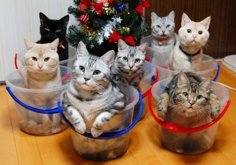 收納貓咪3