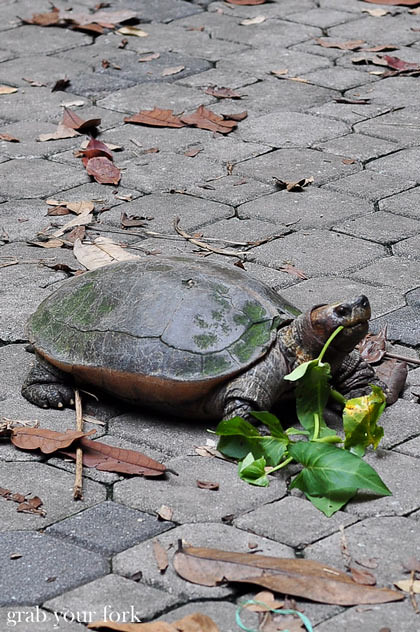 Tortoise at Sam Poh Tong Chinese Buddhist Temple