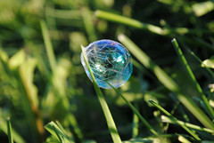 spider lines (basia lukasz) Tags: blue friends sun green broken grass lines stem focus warm chinatown purple stuck bright chinese violet bubbles clear wrinkles webs