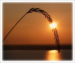 Une goutte de soleil. A drop of sunshine.(1) (Amiela40) Tags: sunset soleil drop coucherdesoleil stlawrenceriver fleuvestlaurent anawesomeshot platinumheartaward bestcapturesaoi elitegalleryaoi virgiliocompany mygearandme mygearandmepremium mygearandmebronze