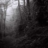 mist misty trees fog foggy clevedon path winter Mark Riley Cardwell Cardiff Journalism student