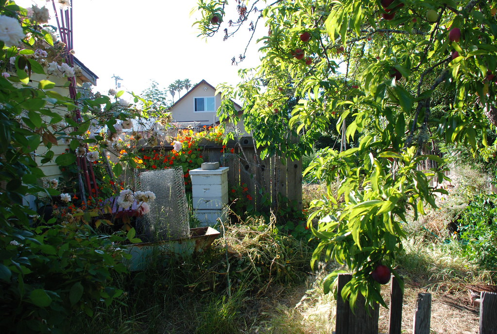 fruited trees and bees