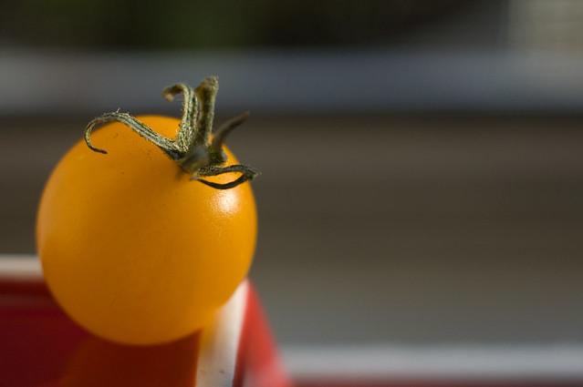 nikon - first tomato-0039