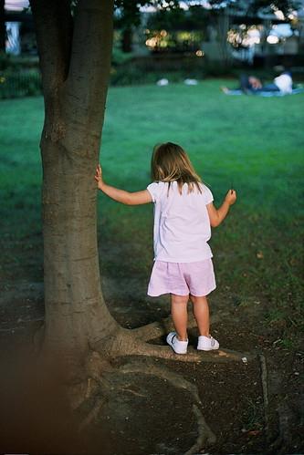 liked the tree