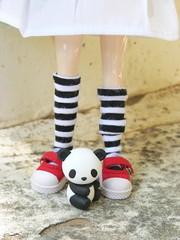 Tiny panda bear