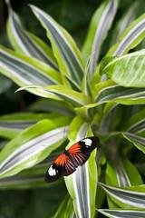 Bild aus dem Schmetterlingshaus auf der Insel Mainau