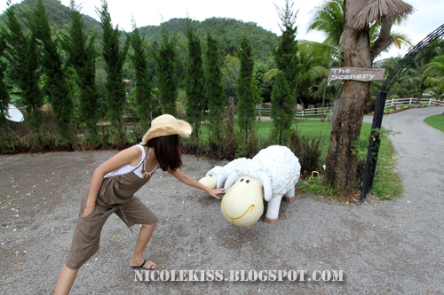 noi nha and scenery sheep