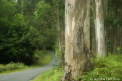 En la senda (Julin Meizoso Garca) Tags: camino bosque valdovio meiras pentaxk10d inthepath efectoorton michaelortonseffect