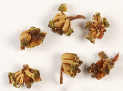 Dried Flowers in PA - Hotfrog US - free local business directory