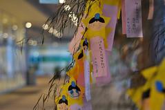The wish of the Star Festival... (soresia.) Tags: wish starfestival stripofpaper タナバタ