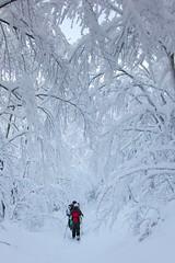 Ciaspolata Monte Falterona (Roberto Nencini - Nencio) Tags: gelo neve cai toscana rosso montagna bianco freddo segnale temperatura ghiaccio faggio ciaspolata gradi ciaspola sottozero rosoo