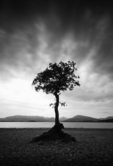 'That tree' again (Semi-detached) Tags: sky tree beach clouds dark that landscape long exposure stones pebbles hills filter shore 09 lee nd loch grad lomond trossachs glaswegians nd1000 milarrochy lochlomondsallochymilarrochy