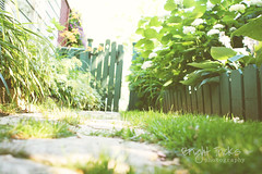 come on in (RebeccaVC1) Tags: green fence photography gate bright tricks fench fencefriday beckyvancuyk
