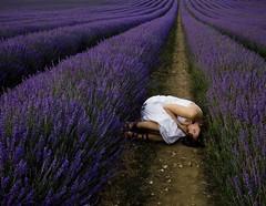 293/365 Lavender Calm (sosij) Tags: england rural canon vanishingpoint purple sleep lavender calm 5d crops hertfordshire foetus herts lavenderfields hitchinlavender iwantedsomethingamazing andfoundithardtochooseoneimage theheadysmellandbeautifulsightneedstobeseen butitmademesorelaxedandhappyithinkthisone thatcapturedthis