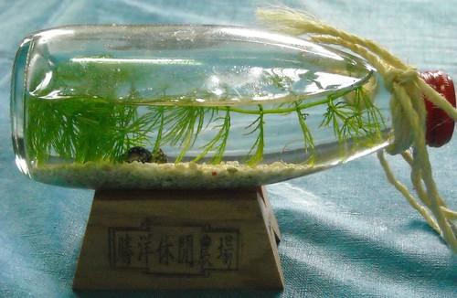 水草生態瓶