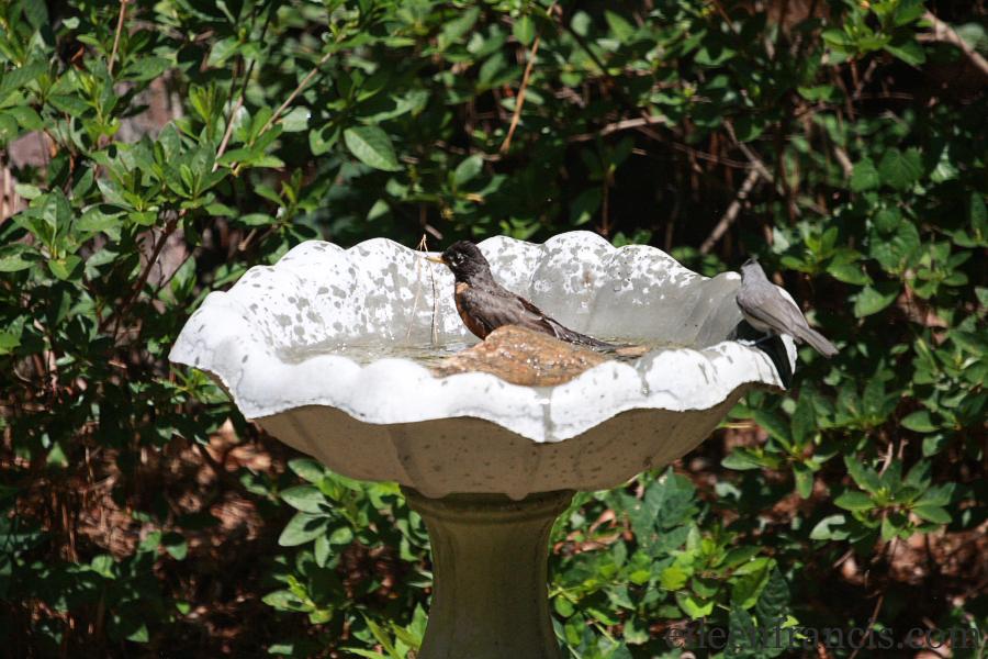 birdbath100 web