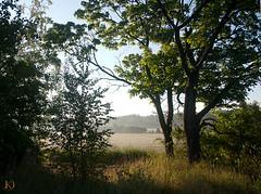 The Morning Walk (Chrisseee) Tags: morning trees field sunrise canon finland landscape view branches okra bushes maisema hays pelto raisio kristiinahillerström chrisseee