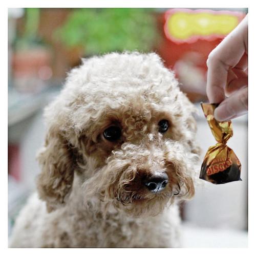 Dog Dog Dog