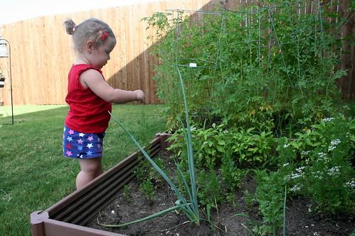 Garden @12 Weeks