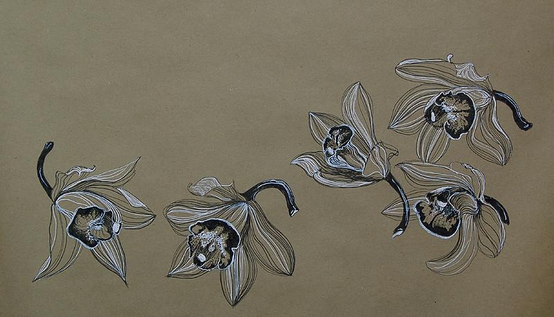 _orchids_