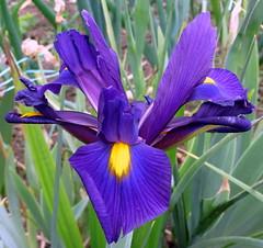 Purple Passion (canonsnapper) Tags: orchid flower nature diamondclassphotographer flickrdiamond