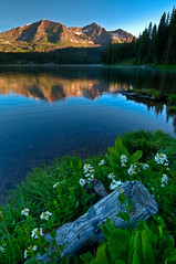 Lake Irwin Wildflowers (Mike Berenson - Colorado Captures) Tags: nature water nikon colorado wildflowers 4wheeling allrightsreserved crestedbutte d300 wildflowerfestival lakeirwin coloradocaptures 2010mikeberenson