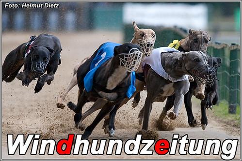 Greyhound Hündinnen Sprint Finale