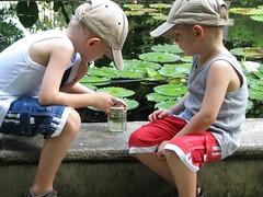 tadpole catching