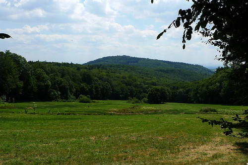 Taunus Landschaft vor Eppenhain. Juli 2010