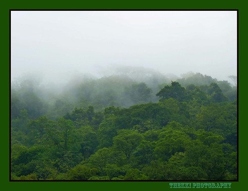 Western Ghats_Rainforest