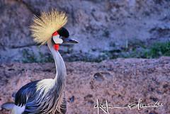 Exotic Afriacan Bird