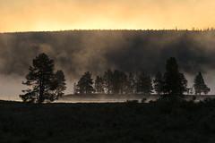 A morning mist rises from the Yellowstone River at sunrise (gr8dnes) Tags: usa mist weather fog america sunrise us unitedstates unitedstatesofamerica yellowstonenationalpark northamerica environment yellowstone wyoming sunrises sunup daybreak yellowstoneriver wy haydenvalley yellowstonepark photocontesttnc10