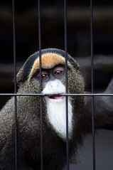 Asahikawa Zoo-100724-18