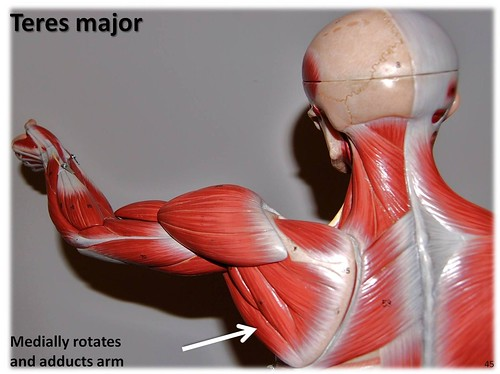 Teres major - Muscles of the Upper Extremity Visual Atlas, page 45