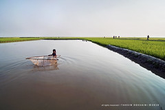 green horizon & a fishergirl! (Tahsin Hossain) Tags: life fish color green net wet water girl beauty field landscape pond nikon alone paddy horizon lifestyle catching bangladesh haor d90 tahsin shunamganj tanguar