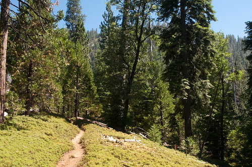 Mariposa Grove to Wawona Lodge