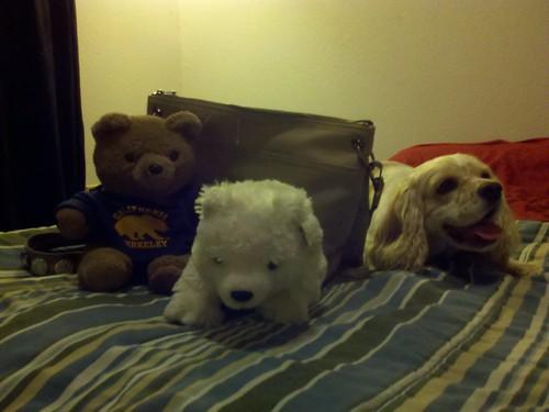 Bears vs. Daisy