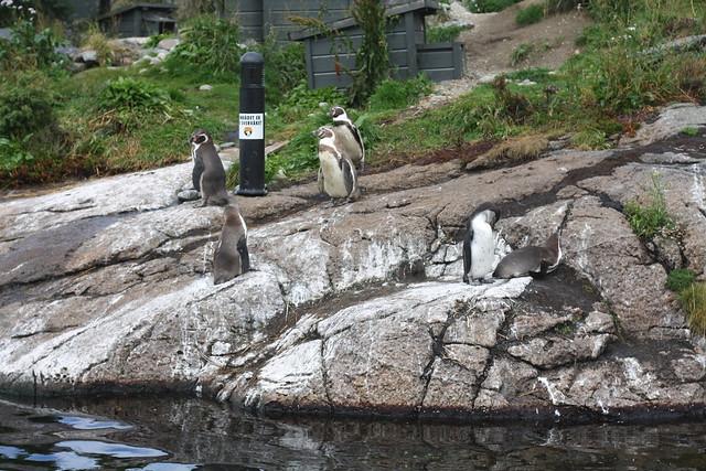 Pigviner på akvariet