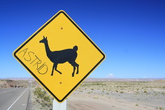 Beware llamas, on the road from Sajama (Pikes On Bikes) Tags: road sign america south llama bolivia astrid andes lapaz altiplano parinacota sajama cycletouring americadelsur pomerape pikesonbikes