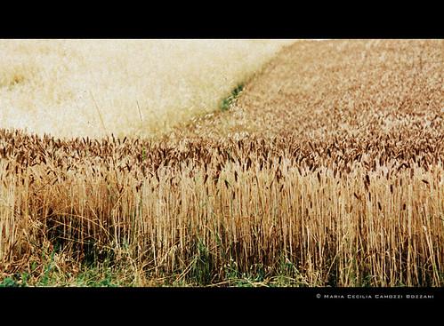 field - foto di Maria Cecilia Camozzi Bozzani