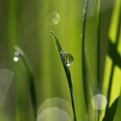 [フリー画像] 花・植物, 植物(その他), 雫・水滴, グリーン, 201008100300