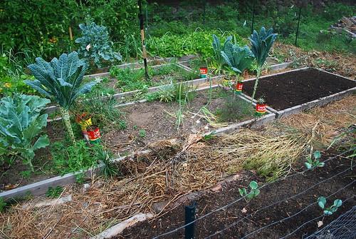 Messy Garden 2