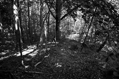 Black Monochromat Forest (Andi Licious) Tags: wood summer forest canon germany deutschland eos blackwhite sommer sw dslr 1785mm schwarzweiss canoneos 2010 saarbrücken saarbruecken 50d canonef1785mm canoneos50d canon50d andilicious saarbrÿcken andreaswieser canonefisusm1785mm