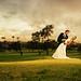 Wedding Light.....
