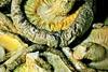 Shiitake Mushies (Catching Magic) Tags: food nikon ugly tiraudan herb vege thegoodthebadandtheugly