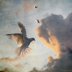 peace dove (AlicePopkorn) Tags: light love beauty creativity freedom flying energy peace transformation dove digitalart dream free shift textures creativecommons meditation awareness spiritual presence stillness source consciousness lightness forgiveness oneness alicepopkorn bestcapturesaoi