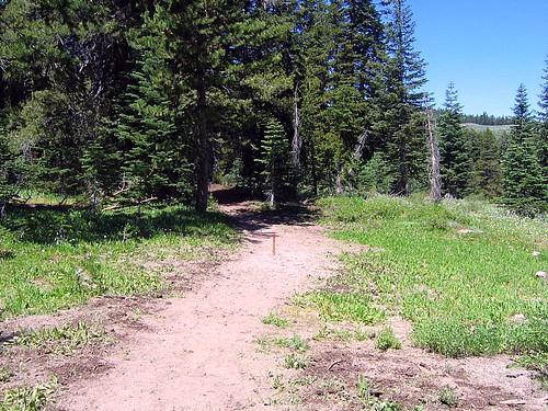 hobart link trail.jpg