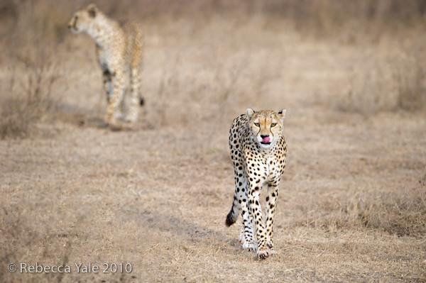 RYALE_Ngorongoro_Crater_51