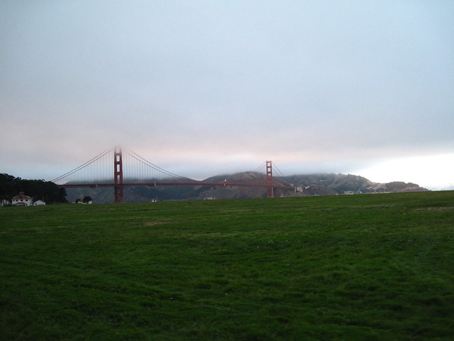 Golden gate grass